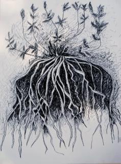 wortelstelsel-klein