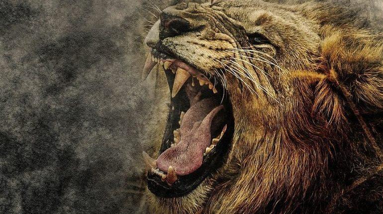 Leeuw (CC0 - Pixabay - ractapopulous)