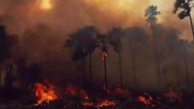 Photo of La Selva Amazónica de Brasil arde en llamas a gran velocidad
