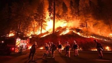 Photo of Científicos desarrollan gel para combatir incendios forestales