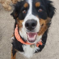 Smiling dog at the park.