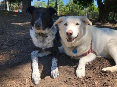 Stella and Jackson--best friends.