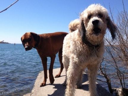 two dogs on the point at the beach
