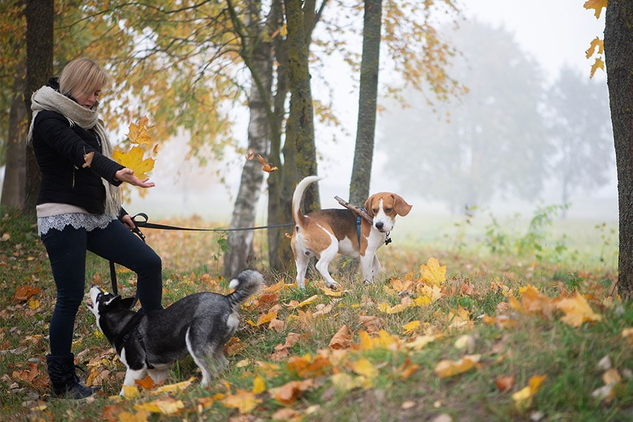 5 HIDDEN GEMS TO WALK YOUR DOG AROUND TORONTO