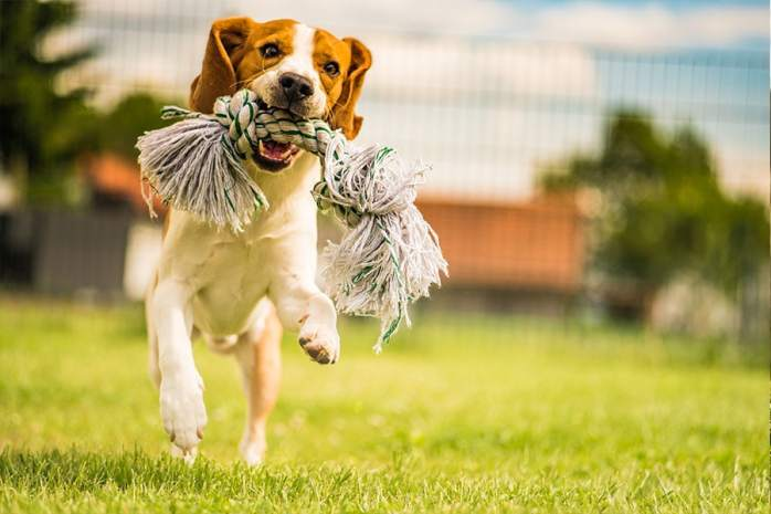 Gifts for Dog Training
