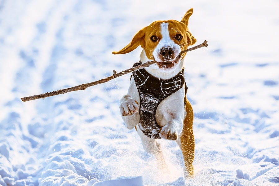 10 ESSENTIAL ITEMS WINTER DOG WALKING
