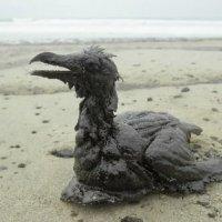 Marée noire n'est pas le nom d'une espèce d'oiseau