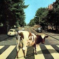 Le catalogue des Beatles remasterisé...pour les nuls