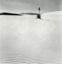 Liberté: le Yucca,, Nouveau-Mexique. Fritz Henle. vers 1943