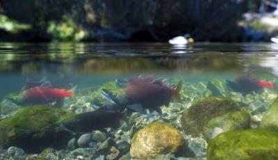Finally, a one-stop shop for locating California's fishes