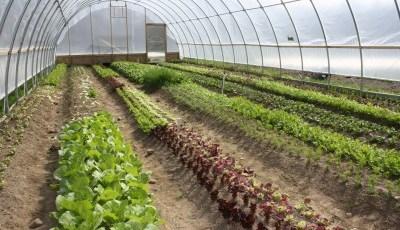 Remote Agricultural UAV Sensing wins 2014 CITRIS Sustainability Award at UC Davis.