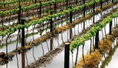 Robotic irrigation coming to CA vineyards