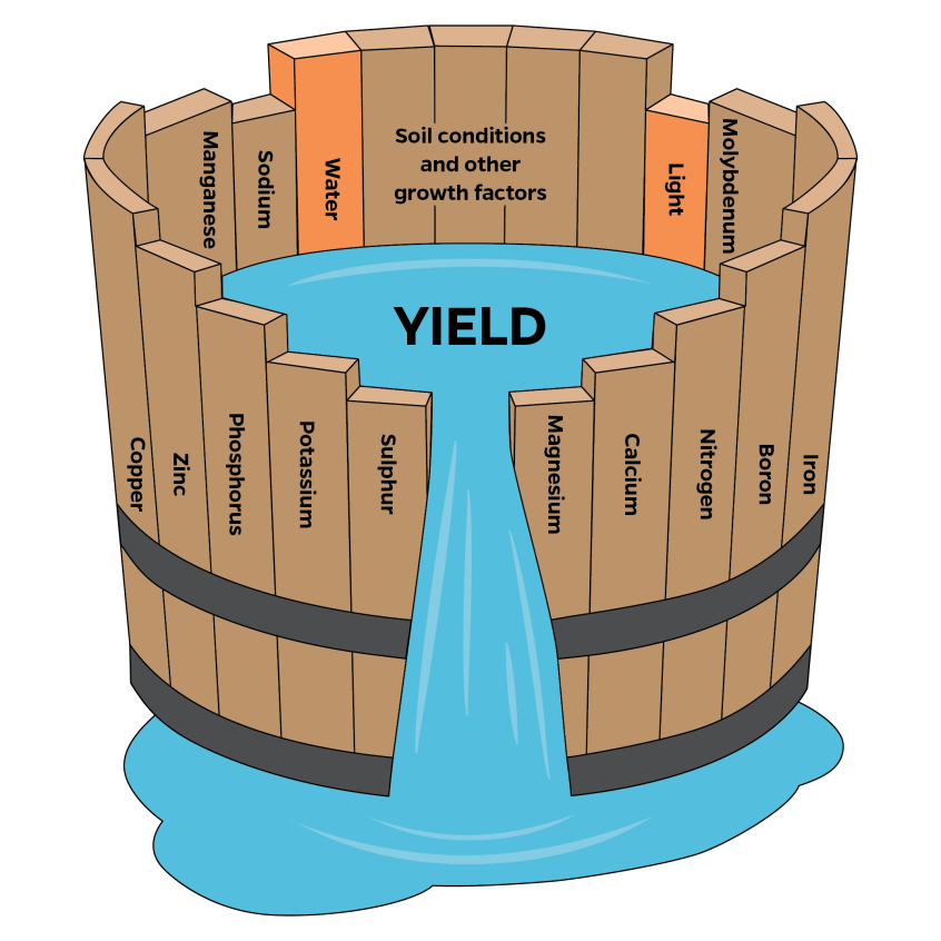waterbarrel-credit-uf-ifas-communications