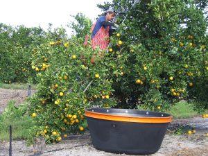 Citrus Harvester Survey