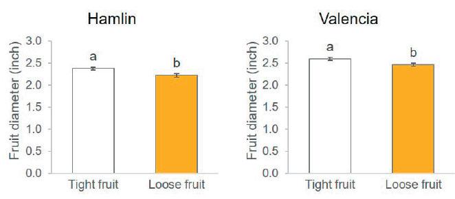 preharvest fruit drop
