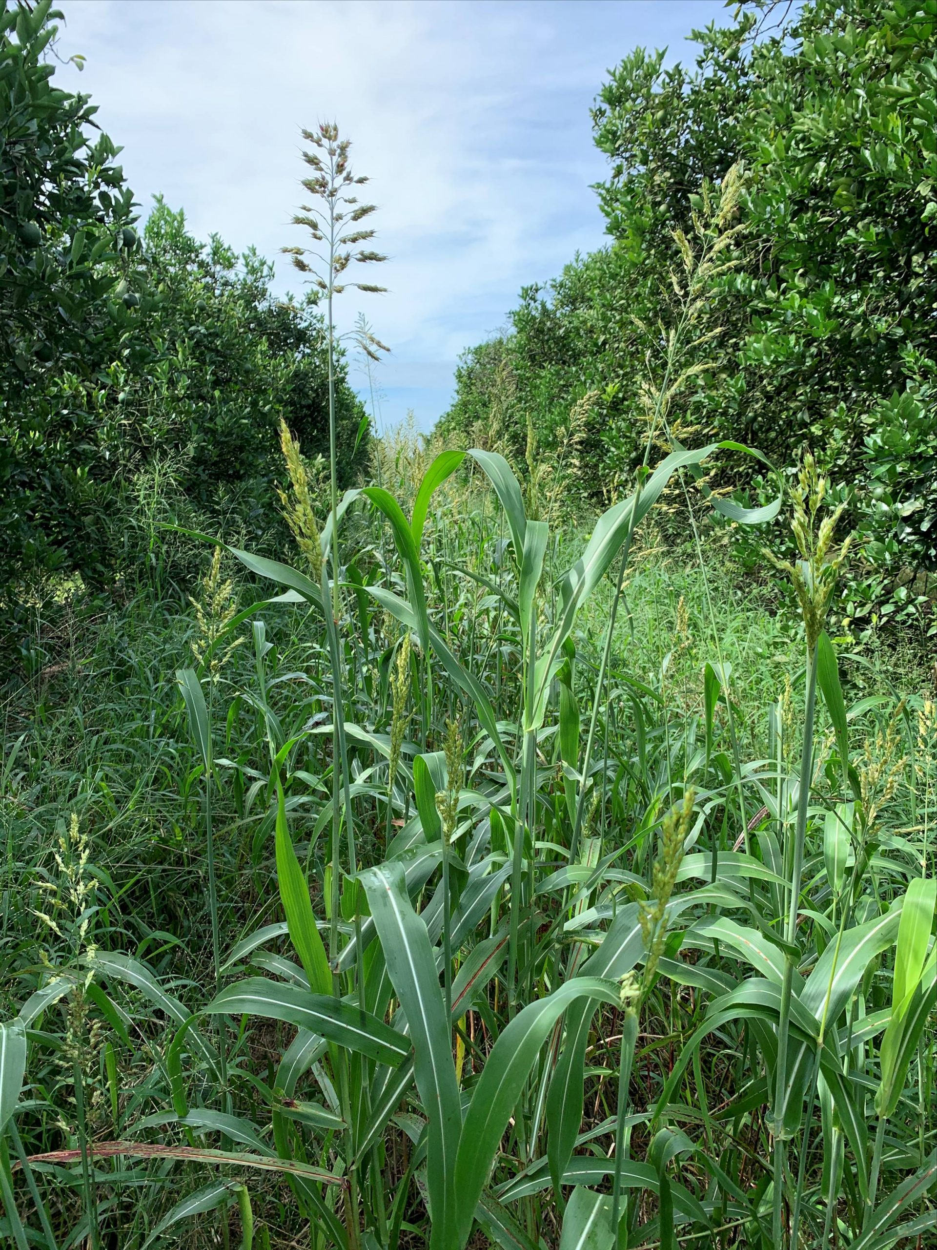 """Featured image for """"What to Consider Before Planting Cover Crops"""""""
