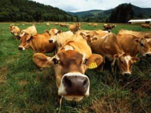 Харьковская обл. увеличила объем производства молока и мяса