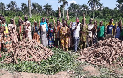 IITA-CWMP signs agreements with 136 farmers