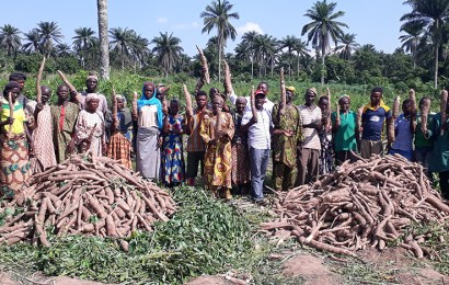 Cassava farmers in Ogun adopts improved weed management practices, records 27tons/ha