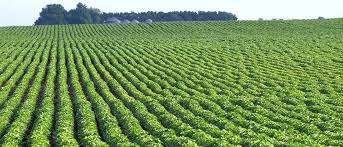 'Agriculture will boost Nigeria's sustainable development'