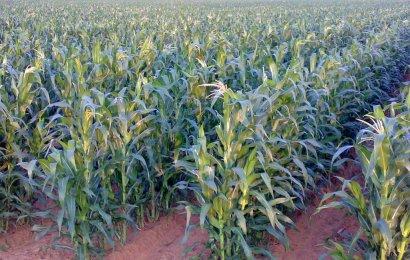 FAO Team In Maiduguri, Explains Support For 149, 730 Farming Households