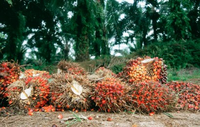 Group Seeks Repositioning Of Palm Oil Value Chain