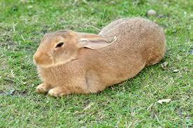 Rabbit Farming Booms In Plateau State