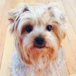Life Lessons for When a Family Pet Dies Young