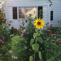 Creating a Pollinator-Friendly Yard