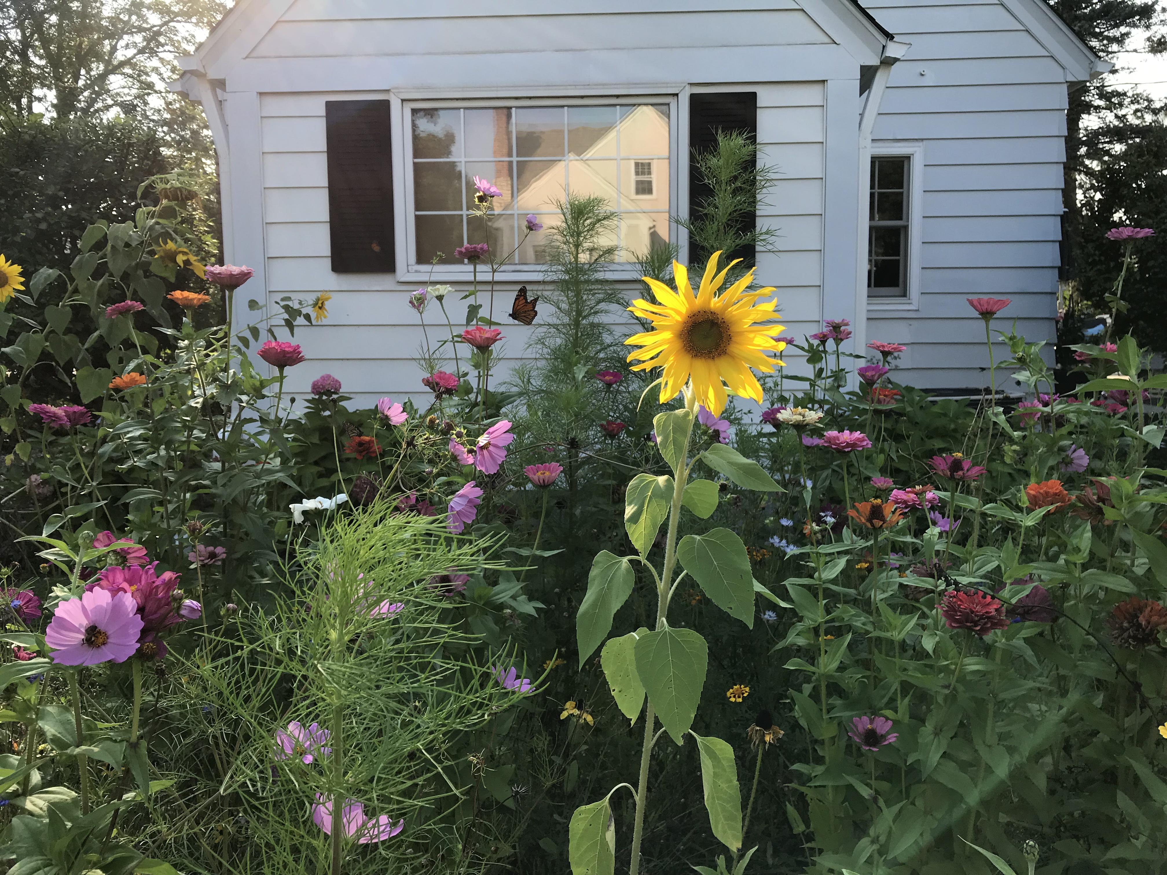 Creating a Pollinator-Friendly Yard
