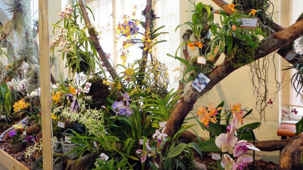 orchidea kiállítás