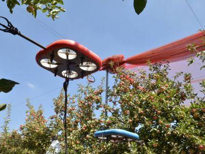 gyümölcs drón