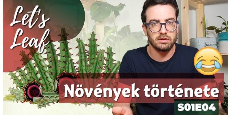 Szobanövények története - Let's Leaf