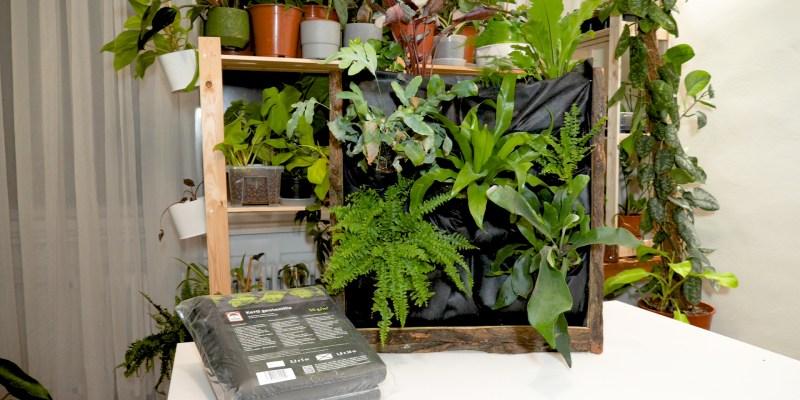 Let's Leaf - Növényfal készítése házilag