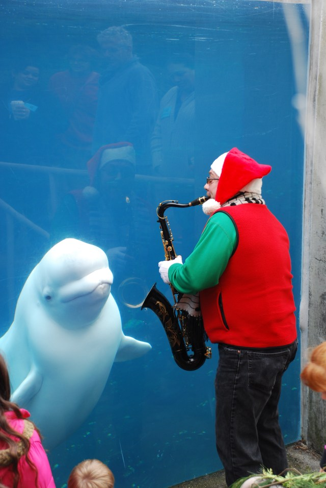 The belugas loved their live local musicians.  Lots of good vibrations for all!