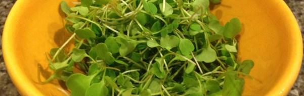 Borrowed Heirlooms:  Spring Salad Recipe from Chef Ed Hoffey
