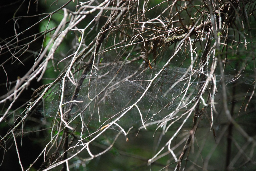 At first I just noticed the branches looking like a spider web.  Then I noticed an actual spider web across the branches.  Isabelle and I talked about all the colours of green that we saw on one path.  At first I thought at least 50 shades but we soon realised 50 was definitely too few.