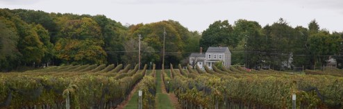 Mother's Day on The Vineyard: The Other Vineyard