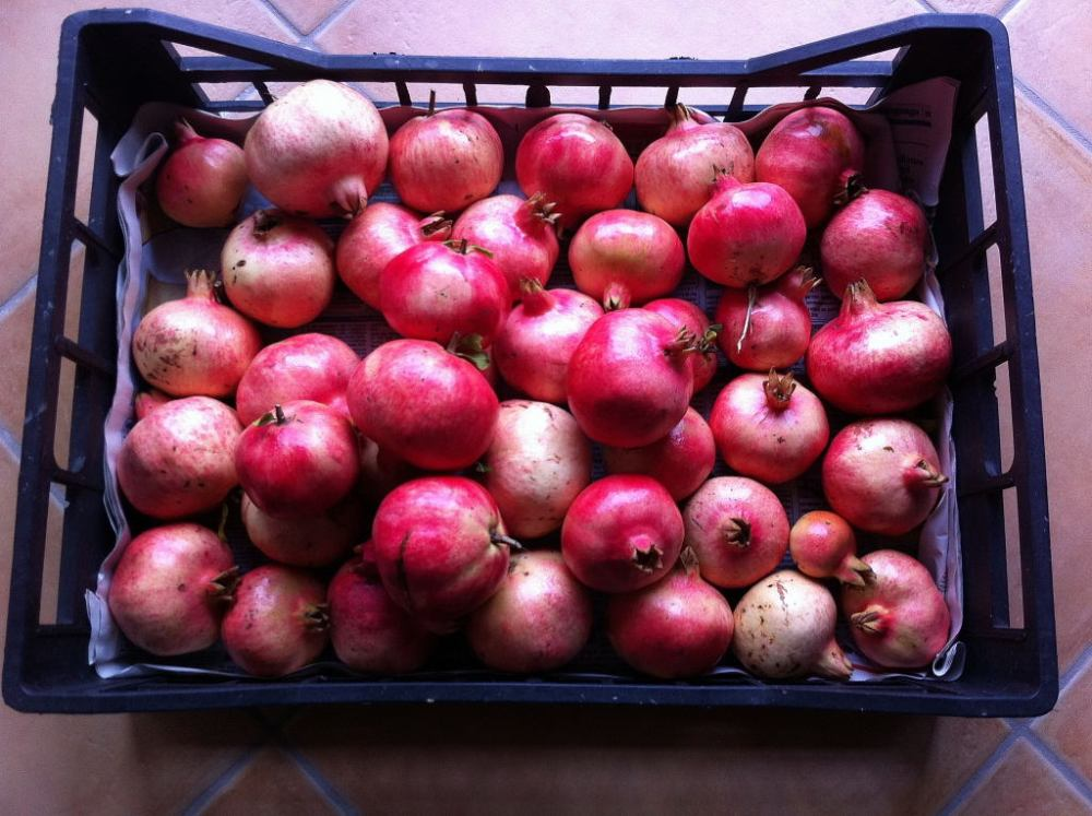 Pomegranate Season (1/4)