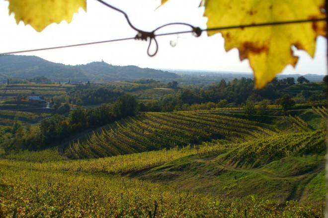 Vinogradi Sinefinis