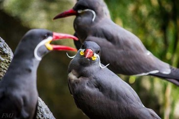 Ptičji brki