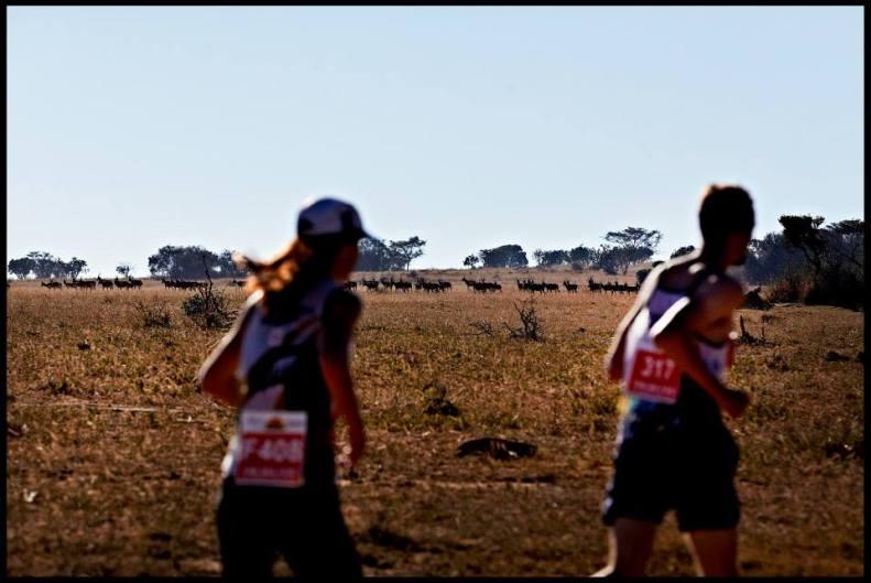 the big five marathon