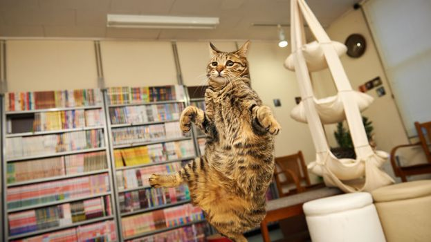 funny-jumping-cats-100__880