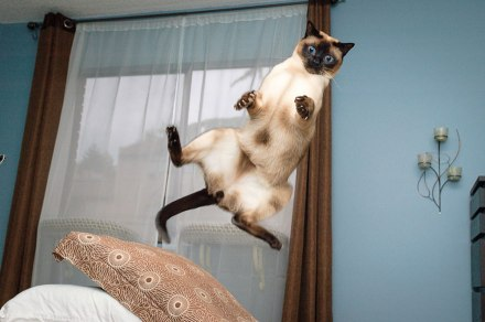 funny-jumping-cats-90__880