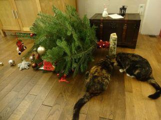 """""""Božično drevesce, si v redu?"""""""