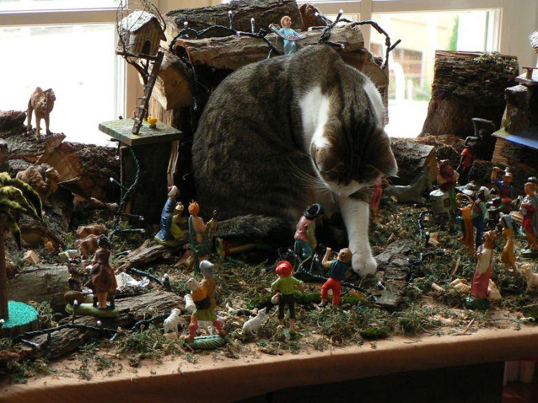 Ne slon v trgovini s porcelanom, mačka med jaslicami.