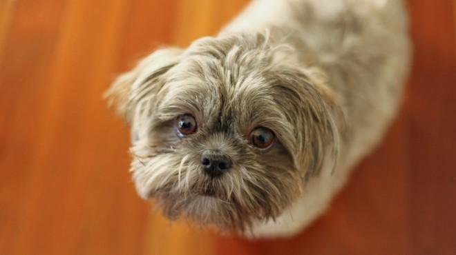 Ljudje in psi so čustveno na isti valovni dolžini.