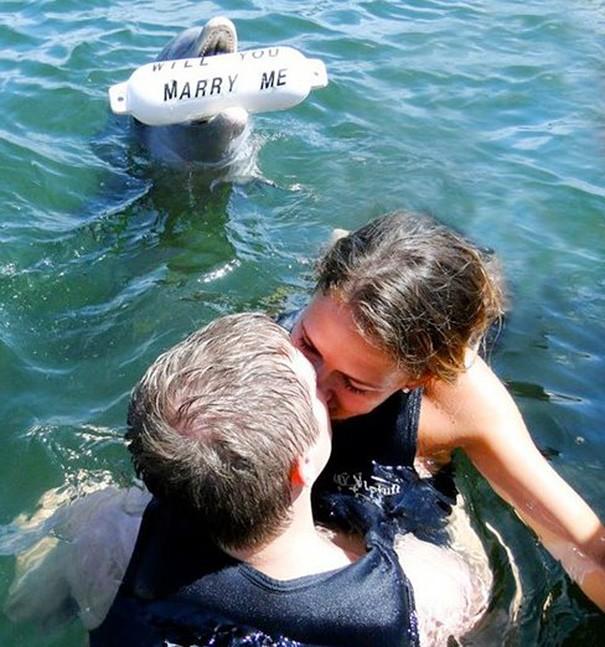 Zaroka s pomočjo delfina