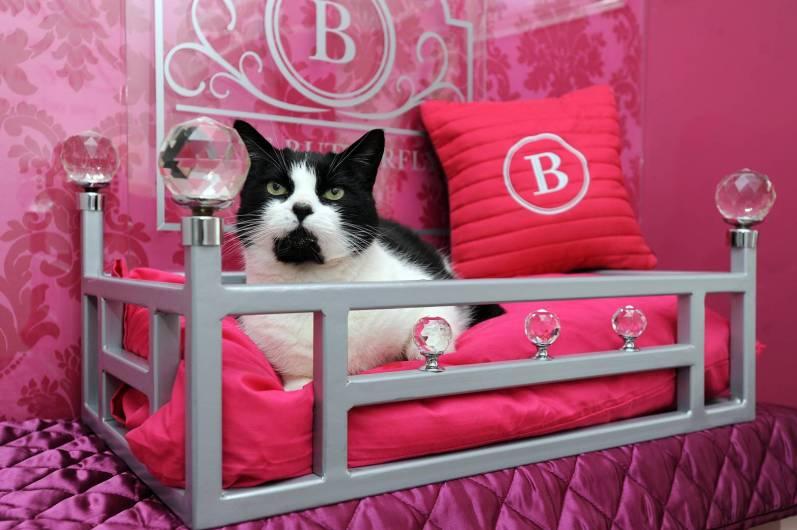 Luksuzni hotel za mačke The Ings Luxury Cat Hotel