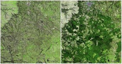 Urugvajski gozd: marec 1975 - februar 2009